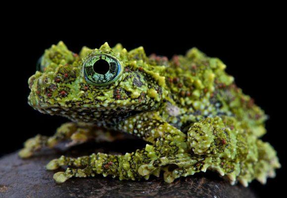 Σπάνιες φωτογραφίες από το ζωικό βασίλειο
